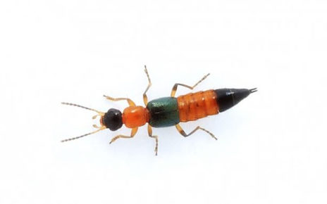 Viral Semut Charlie, Ini 4 Fakta yang Wajib Anda Ketahui