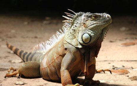 Hewan Reptil Ketahui Ciri Keistimewaannya