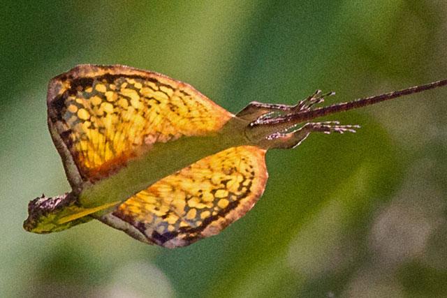 Anggrek Gurita godean.web.id